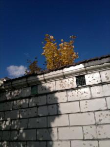 st-johns-cemetery-06-altoona-pa